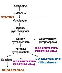 how statins work